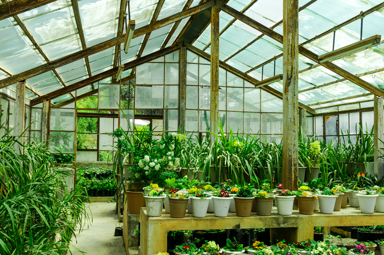 Green house Supplies Essential for Your Growing Success