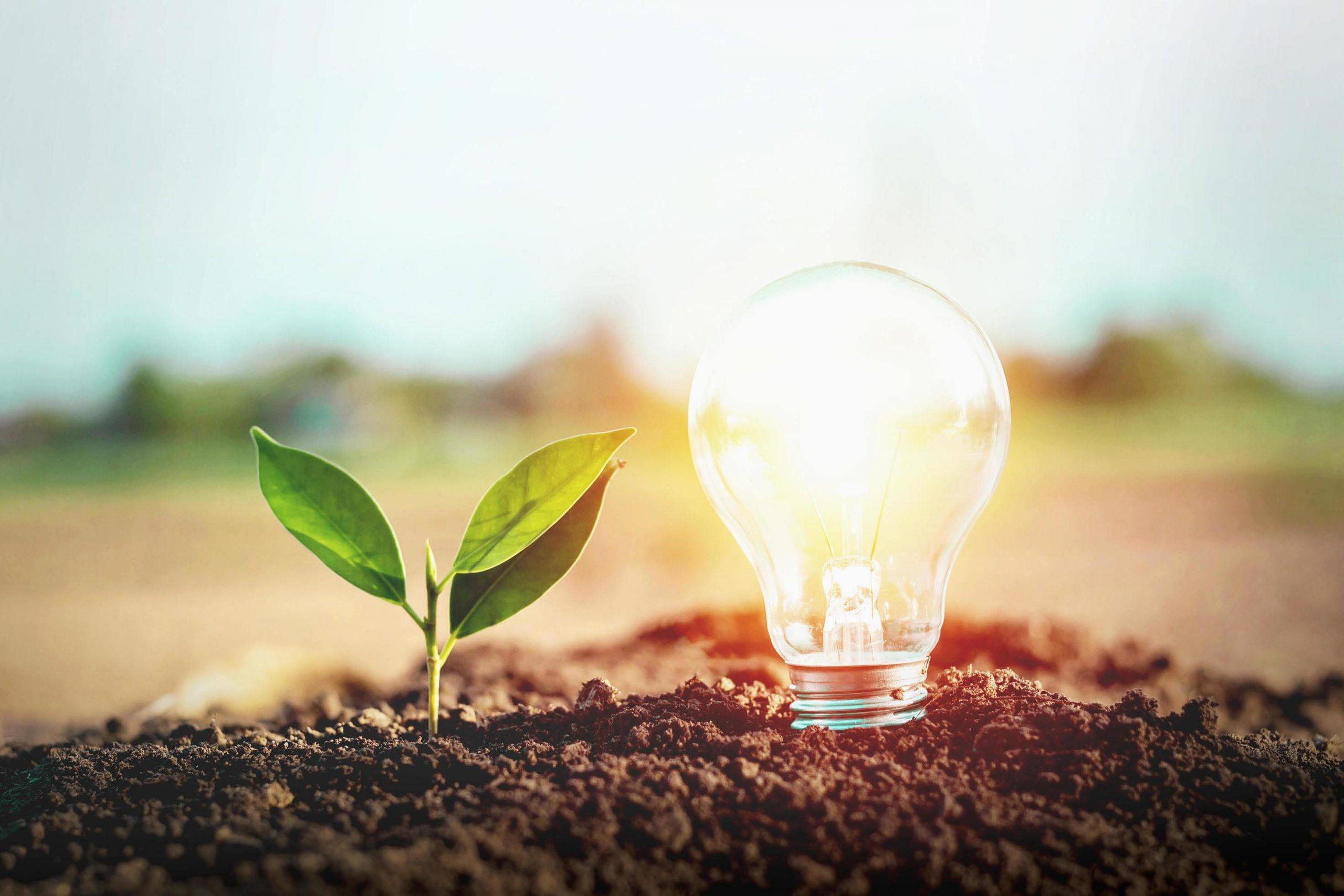 Benefits Of Choosing Energy Saving Light Bulbs