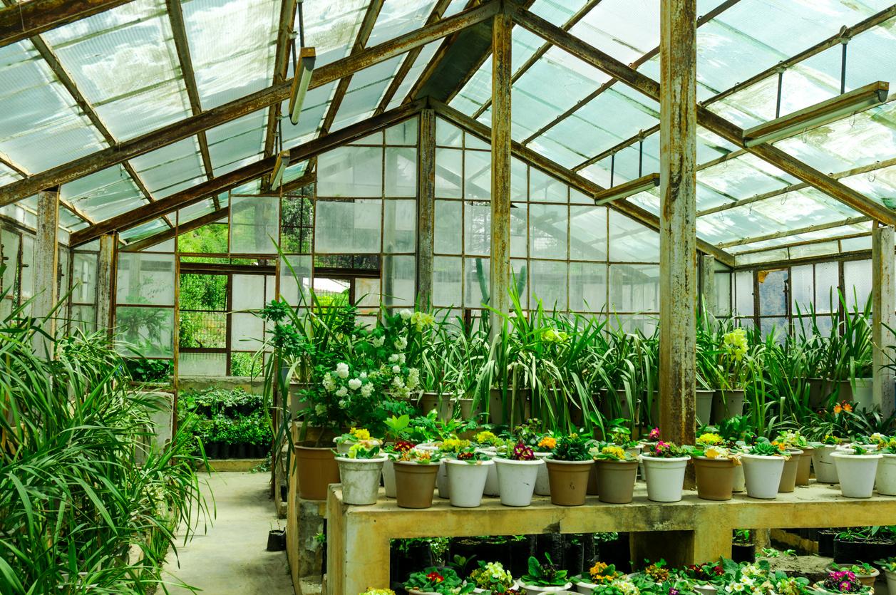 Green house Supplies Essential