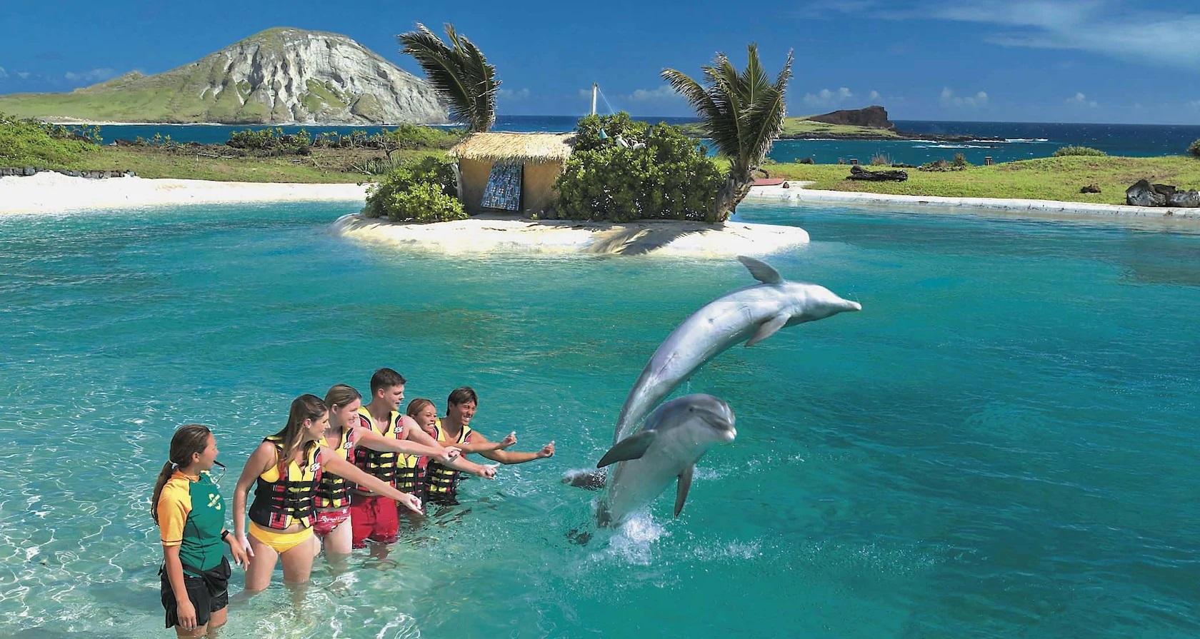 Aquatics using the Dolphins